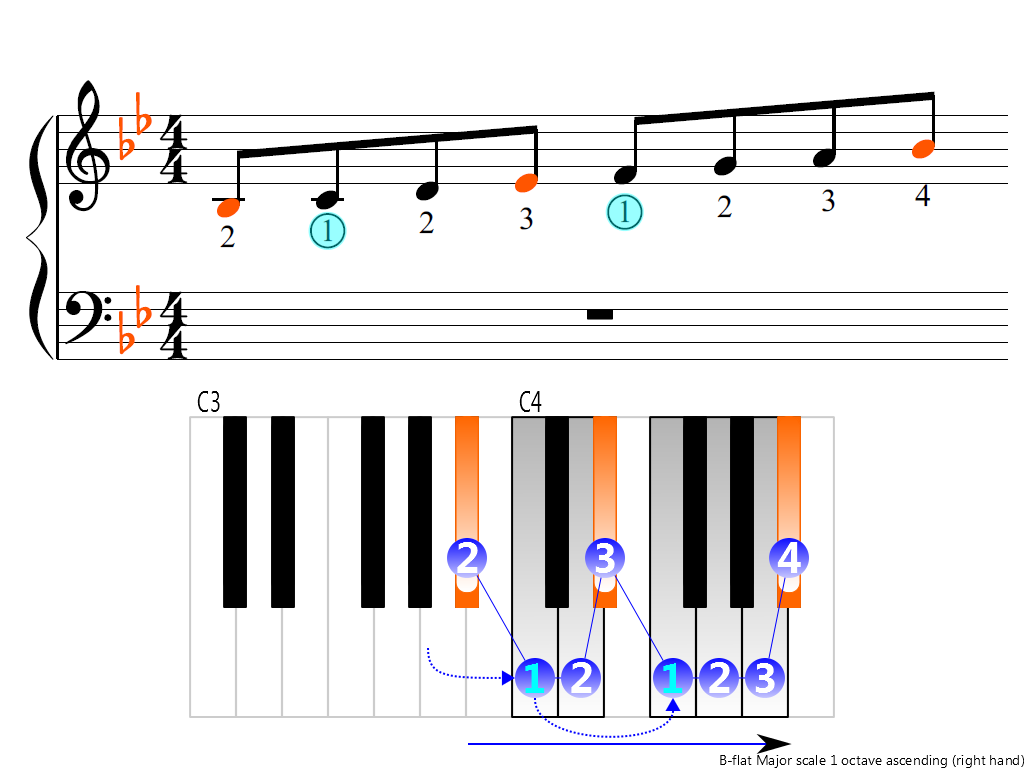 Figure 3. Ascending of the B-flat Major scale 1 octave (right hand)